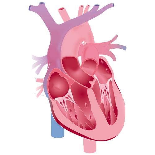 Chirurgie de l'aorte